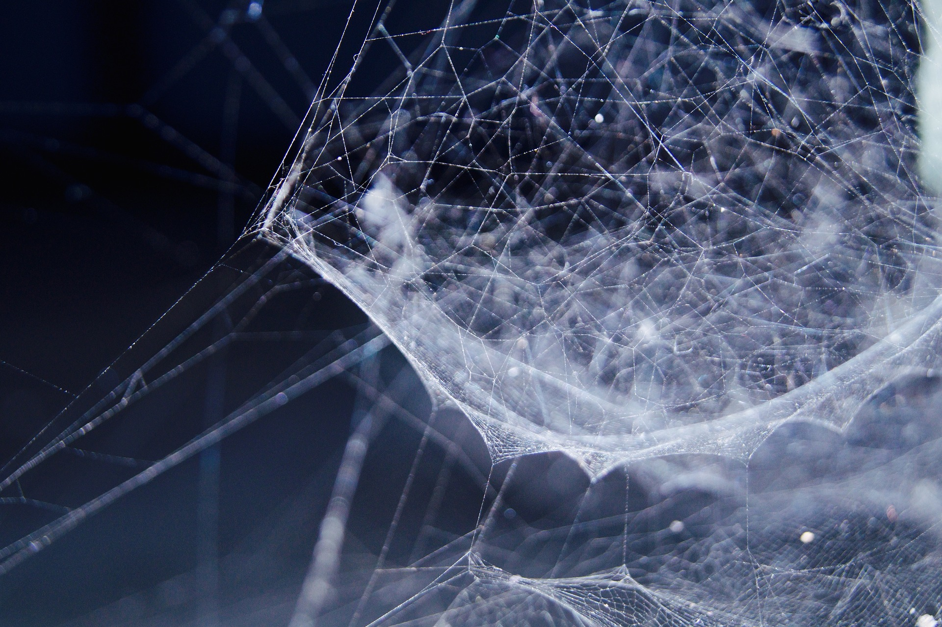 a picture of a web